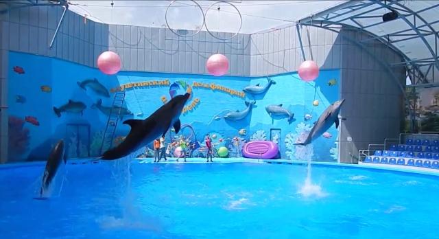 Дельфинарий в Крыму 🐬 и дельфинотерапия