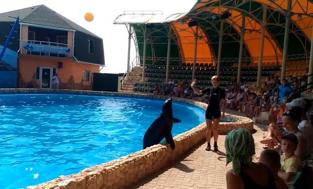 Дельфинарии Крыма - выбираем лучшие