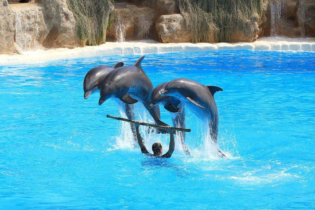 Дельфинарии в Алуште, фото