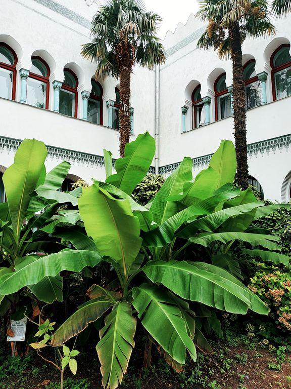 Дюльбер, пальмы, фото