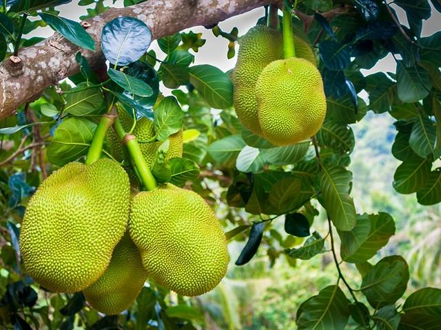 Фрукты Таиланда, джекфрут, фото