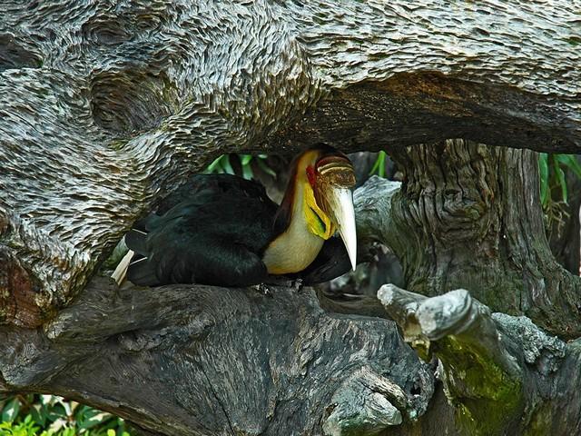 Экскурсия в зоопарк на Пхукете - почему она будет интересна вашим детям?