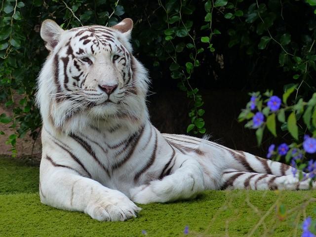 Куда обязательно стоит сходить с ребенком - контактный зоопарк в Паттайе