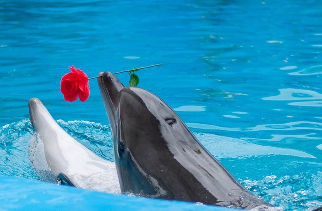 Яркое шоу для детей и взрослых - дельфинарий в Аланье