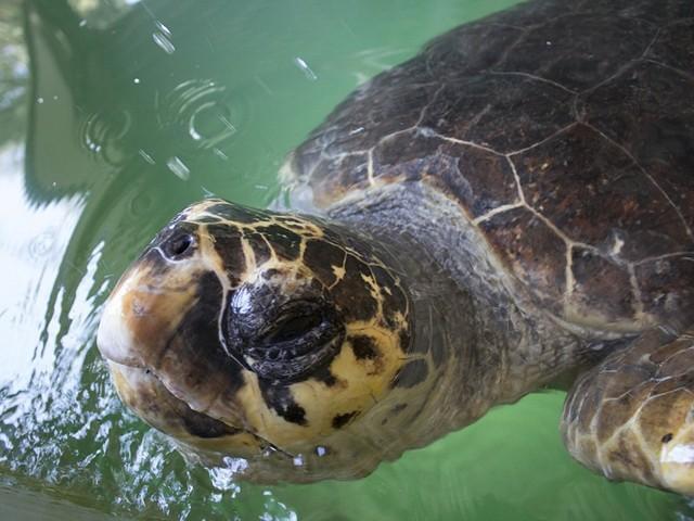 Яркие впечатления от турецкой фауны - Черепаший остров в Дальяне