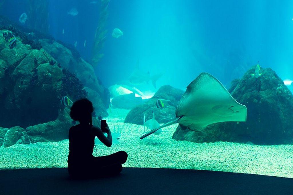 Океанариум (Aquarium) в Анталье: крупнейший в мире аквариум-тоннель