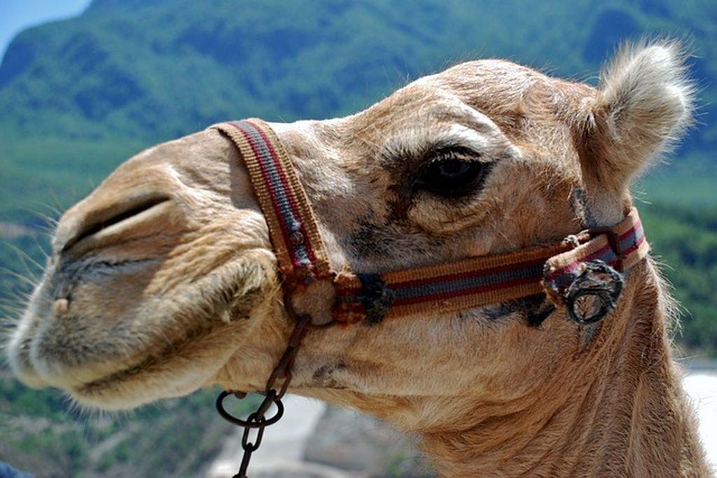 Зоопарк в Тунисе - 36 гектар леса и саванны