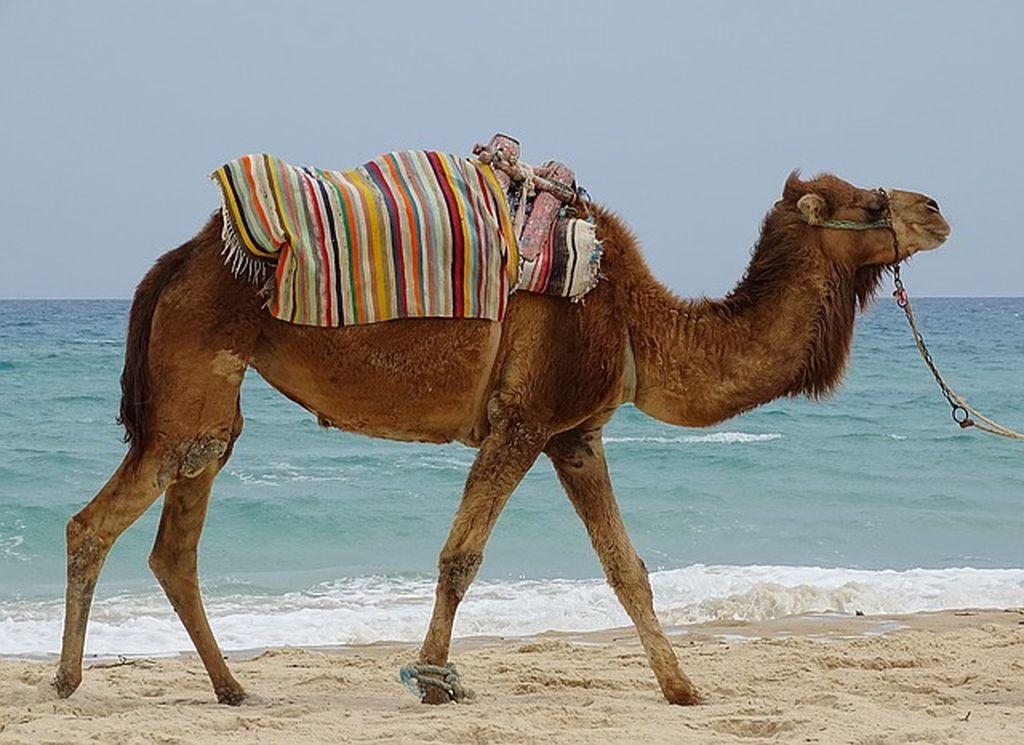 Тунис Сезон для отдыха по месяцам температура воды воздуха курорты когда лучше ехать