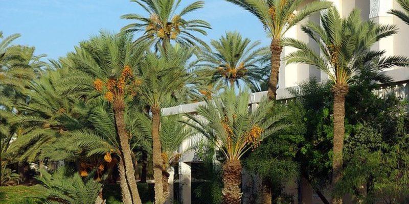 Зарзис в Тунисе - самый южный курорт