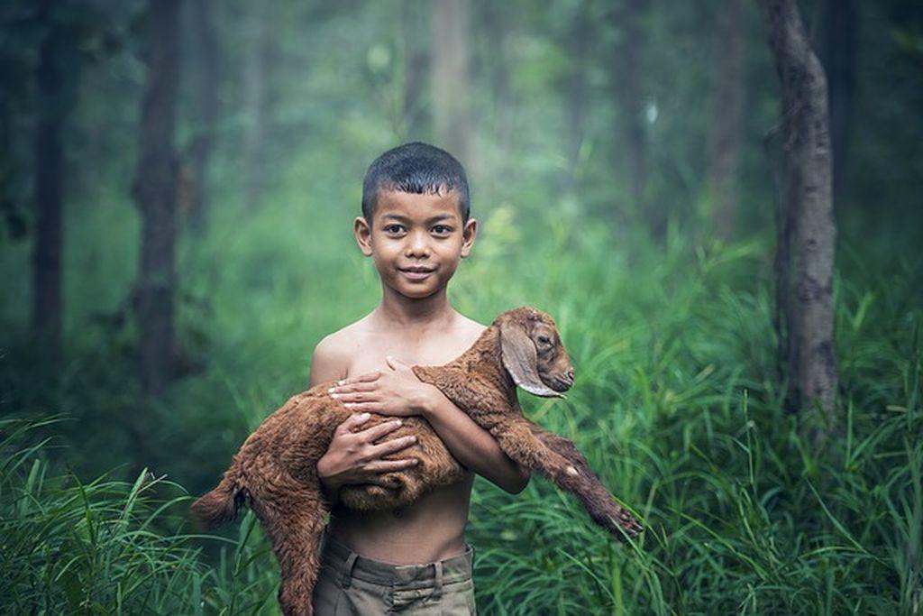 Природа Таиланда ☀ фото и описание местных флоры и фауны