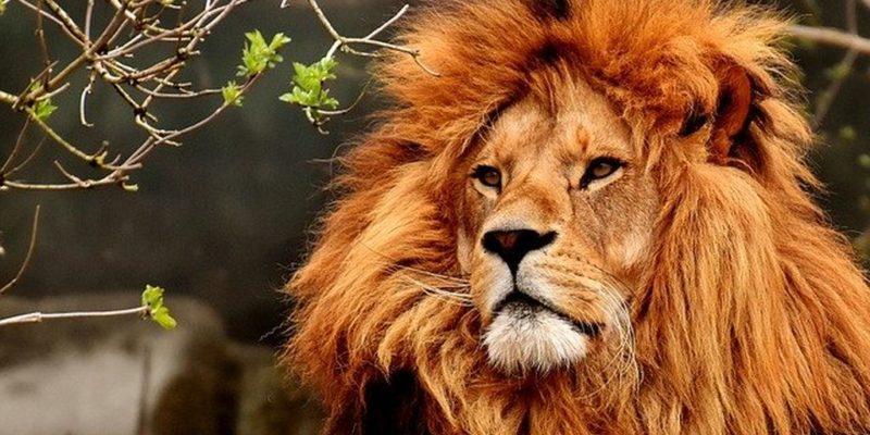 Парк львов Тайган в Крыму, фото