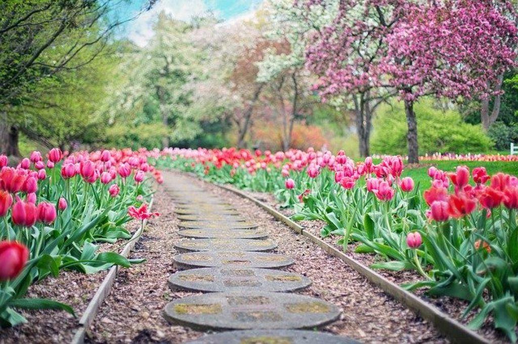Никитский ботанический сад в Ялте, фото