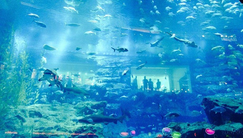 Аквариум в Дубае, фото
