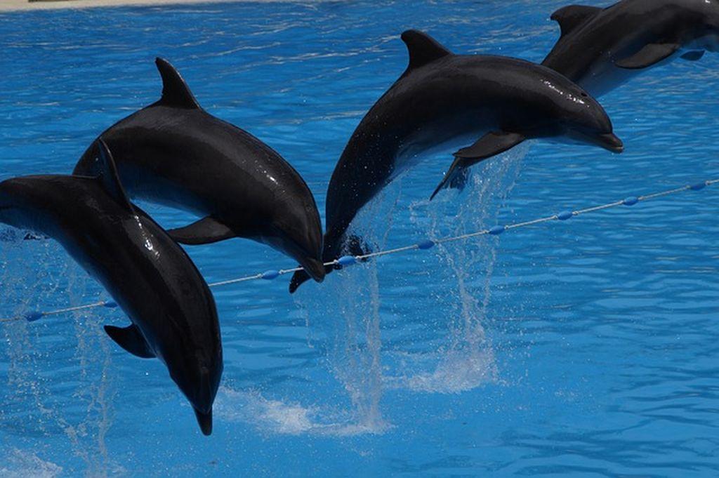 Дельфинарий в Дубае, фото