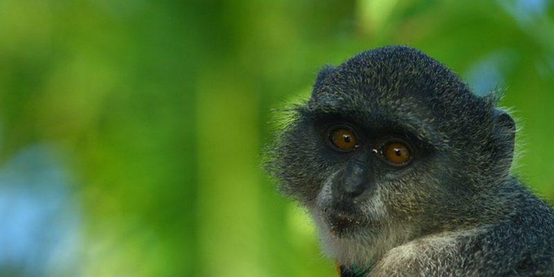 Зоопарк на Занзибаре, фото